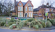 UNITED KINGDOM, London: 11 January 2018 A large pile of Christmas trees take up a vast space along the pavement in Putney this morning as they still remain to be collected. Rick Findler  / Story Picture Agency