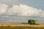 © 2007 Randy Vanderveen, all rights reserved.Clairmont, Alberta.A equipment operator straight combines a crop just north of Clairmont  in the early evening, as he and his co-workers race against the weather as rain clouds build up. Peace Country farmers have been hampered in their harvesting efforts by rain which falls most evenings.