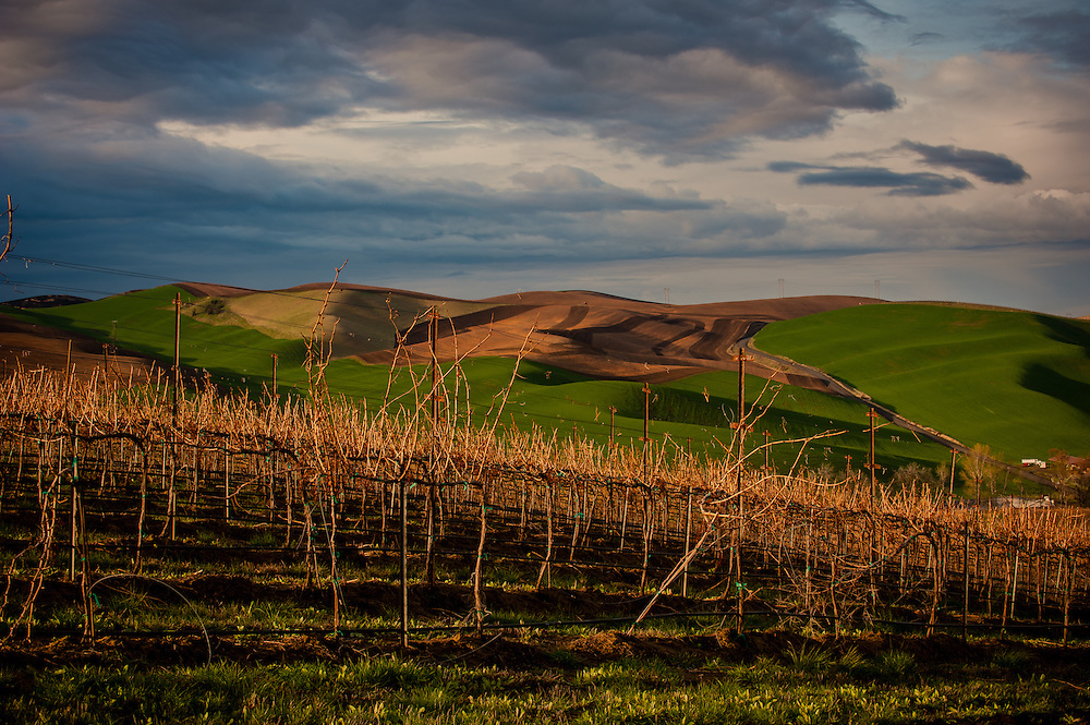 Spring Valley Vineyards Sunrise in Walla Walla Washington