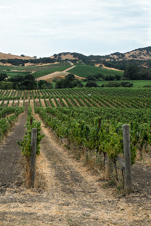 Napa Wine Country | July 20, 2014