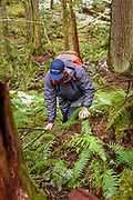 David Page climbs a hill in the rainforest. Gold River, Vancouver Island, BC