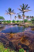 Anchialine Pond, Kaupulehu, Kona Coast, Island of Hawaii<br />