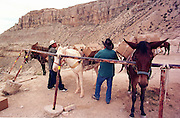 07 AUGUST 2000 - SUPAI, AZ: Sun Eagle, left, and Charlie Chamberlain load mules with the US mail at a hitching rail in the parking lot eight miles above the village of Supai on the Havasupai Indian reservation in northern Arizona, Aug. 7. There are no roads or rail service into Supai, a village of 600 people on the floor of the Grand Canyon, west of the Grand Canyon National Park, so the mail is delivered by mule train. The wranglers who lead the mules down to the village haul everything from letters and postcards to fresh produce and refrigerated foods. The mail is hauled down the steep mountain slopes five days a week rain or shine. It normally takes about three hours to haul the mail down. The mule wranglers are self employed contractors and have to provide all of their own mules and equipment. Because of budget shortfalls, the US Postal Service is threatening to close the post office in Supai.   PHOTO BY JACK KURTZ