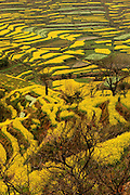 WUYUAN, CHINA - MARCH 22: (CHINA OUT) <br /> <br /> Beautiful Rape Flowers Field<br /> <br /> A general view of the rape flowers field is seen on March 22, 2014 in Wuyuan, Jiangxi Province of China. <br /> ©Exclusivepix