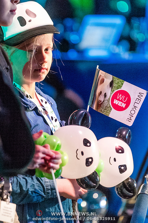 NLD/Amsterdam/20170412- Aankomst reuzenpanda's WU WEN en XING YA in Nederland, jongen met pandaballon