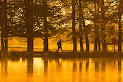 UNITED KINGDOM, London: 05 May 2016 A walker makes his way through Richmond Park this morning on yet another warm day. Temperatures are set to increase through to the weekend, reaching up to 25 degrees. Rick Findler / Story Picture Agency