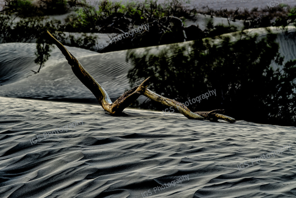 A piece of Driftwood lying in the Dunes at Mesquite flats during a Sandstorm in Death Valley National Park
