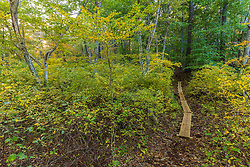 A walking trail in a forest in Marshfield, Massachusetts. Hoyt-Hall Preserve.