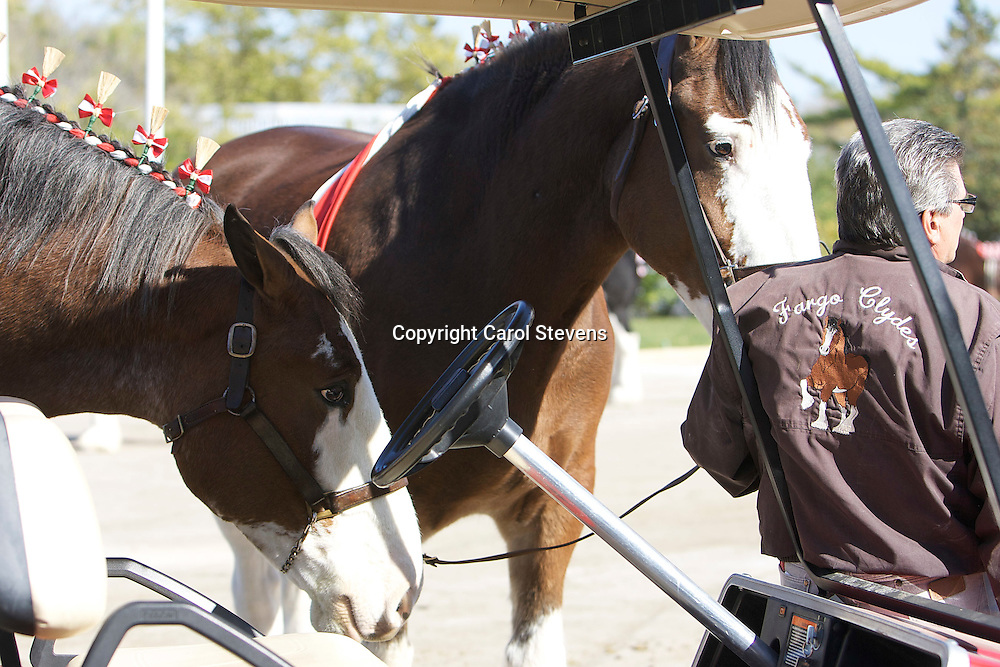 World Clydesdale Show 2011   Madison, Wisonsin, USA