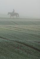 Horse rider appearing out of the mist in a Swiss meadow.