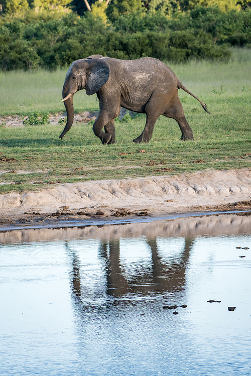 An elephant marches alongside a watering hole in Hwange National Park. Hwange, Zimbabwe.