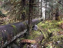 This steel pipe built between 1912 and 1914 once carried water over one mile from Nugget Creek to the Nugget Creek Powerhouse. The pipe is located on the Trail of Time near the Mendenhall Glacier just outside Juneau, Alaska.