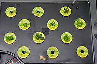AeroGarden Farm 1 Right. at 8 days. Lettuce (Red Romaine, Deer Tongue, Marvel of 4 Seasons, Paris Island, Black-seeded Simpon, Red Sails), Basil, Chives, and Dill. Image taken with a Leica TL-2 camera and 35 mm f/1.4 lens.