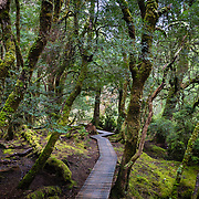 Pathway through forest at Cradle Mountain, Tasmania