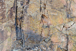 Cliff wall and tree along Seco Creek, Ladder Ranch, west of Truth or Consequences, New Mexico, USA.