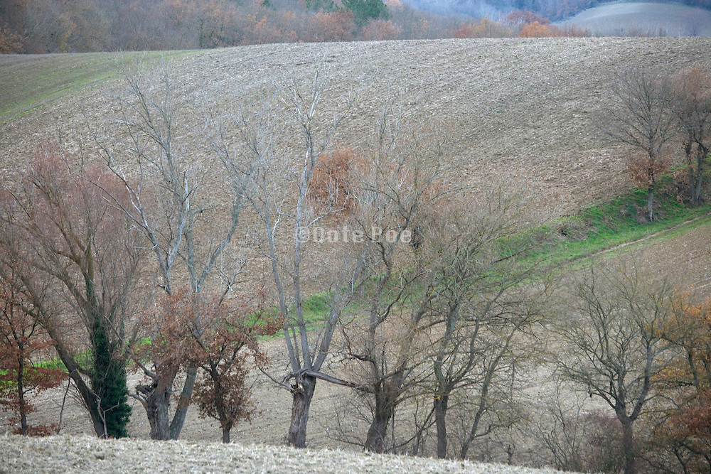 bare fields during late autumn France Languedoc