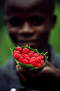 Boy selling raspberries on the way to the entrance of Obo National Park.