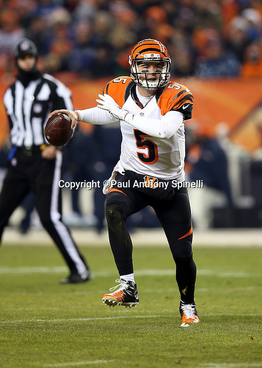 Cincinnati Bengals quarterback AJ McCarron (5) scrambles while looking to pass during the 2015 NFL week 16 regular season football game against the Denver Broncos on Monday, Dec. 28, 2015 in Denver. The Broncos won the game in overtime 20-17. (©Paul Anthony Spinelli)