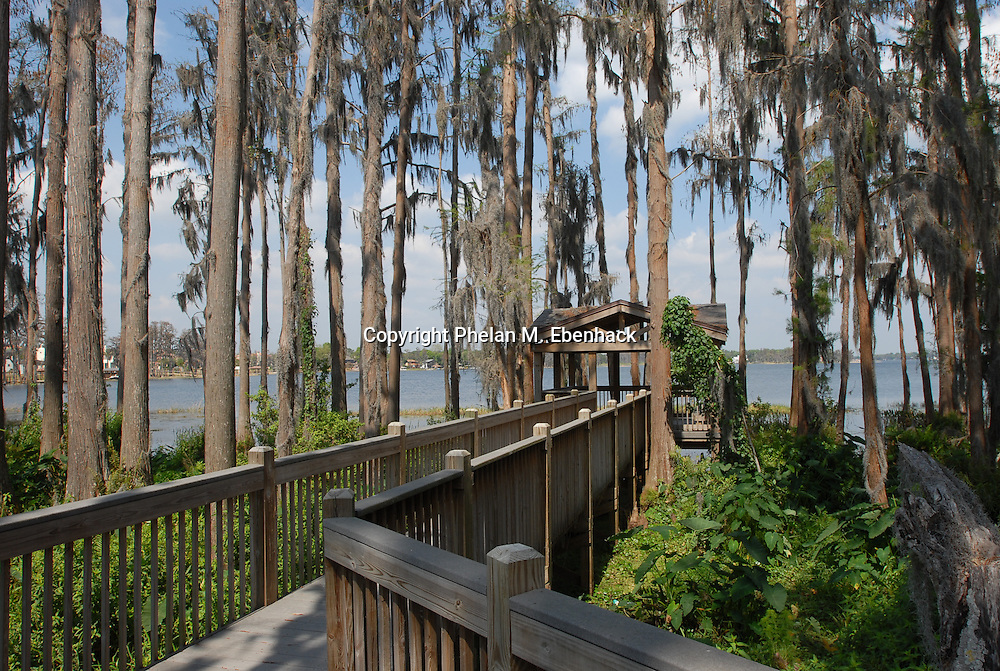 A wooden walkway meanders between a stand of cypress trees to the waters of Lake Butler in Orlando, Florida.
