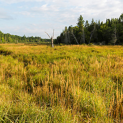 Wetlands in the Reed Plantation in Reed, Maine.