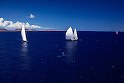 Twizzle and Kokomo sailing past whales during the Caribbean Superyacht Regatta and Rendezvous, race 2.