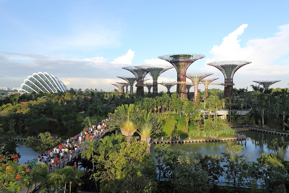 Supertree Grove in Gardens By The Bay in Singapore. Each of the 25-50 metre trees is covered in more than 200 species and varieties of bromeliads, orchids, ferns and tropical flowering climbers. The Cloud Forest conservatory is in the background.