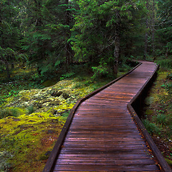 Trail of Two Forests, Mt. St. Helens National Volcanic Monument, Washington, US
