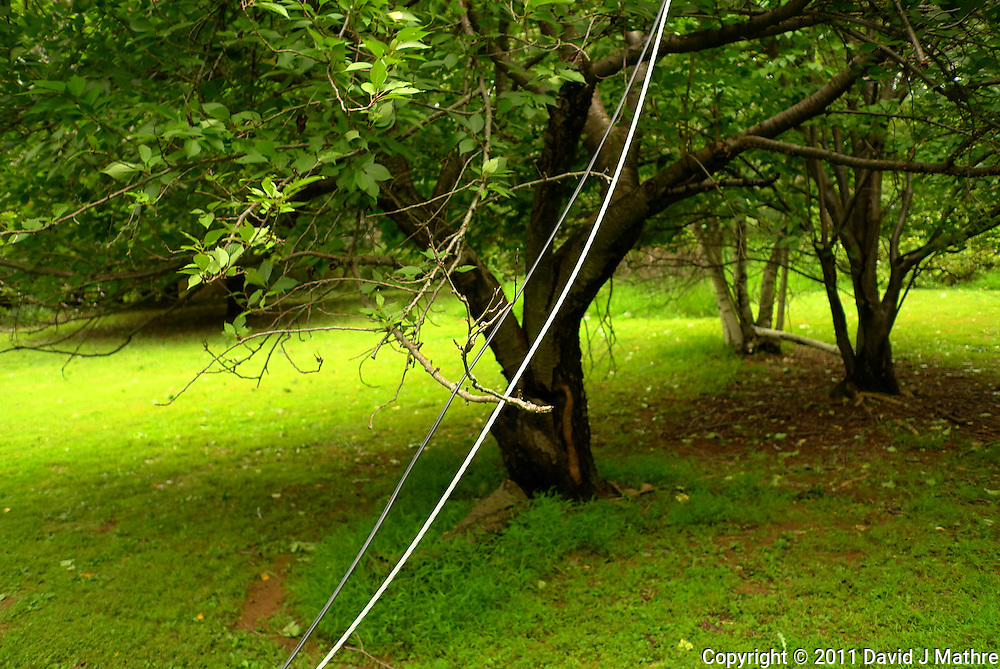 Downed Power Line. Hurricane Irene. Image taken with a Leica X1 camera.