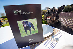 Hamish, the Commonwealth Scottie Dog, checks out the Chez Roux dog menu at Greywalls Hotel & Chez Roux, Gullane.