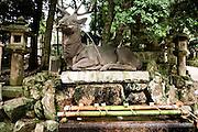 Stone lanterns at Kasuga Taisha.