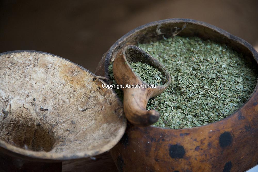 Erve à Mate, plante consommé dans le Chimarron utilisées à l'origines par les indiens Tupi Guaranis.