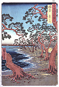Pine trees by a shoreline. Coloured woodblock print. Ando Hiroshige  also called Ando Tokutaro (1797-1858) Japanese artist and printmaker.