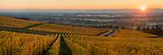 Golden fall colors, Cristom Vineyards, Eola-Amity Hills AVA, Willamette Valley, Oregon