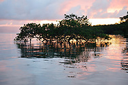 Sunrise over a mangrove forest in Golfo Dulce, or Sweet Gulf in Puntarenas, Costa Rica.