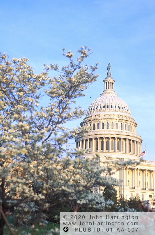The US Capitol during spring time.