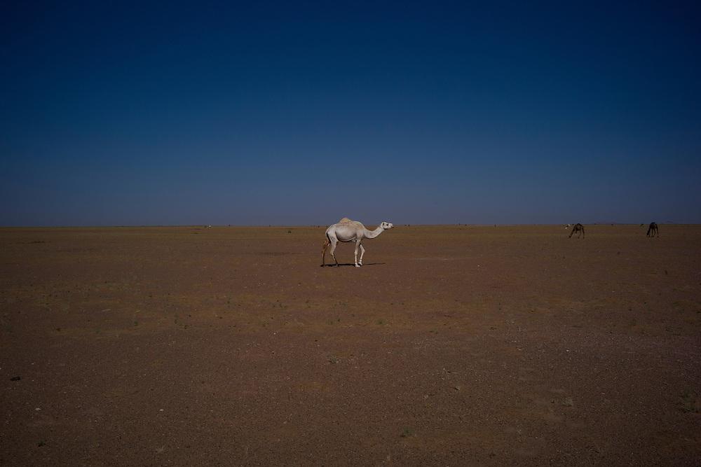 Western sahara 2016-10-20