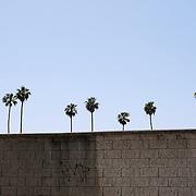 Tree-Lined Wall, Los Angeles, California, 2012