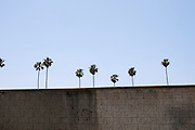 Tree-Lined Wall, Los Angeles, California, 2012