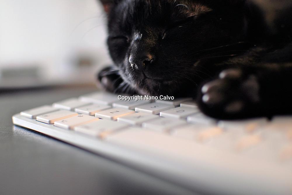 Cute black cat resting on keyboard