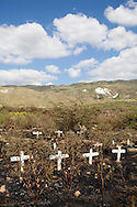 Crosses mark shallow graves near the spot where hundreds have been buried in a mass grave for victims of cholera on Friday, November 26, 2010 in Titanyen, Haiti.