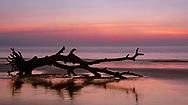 Sunrise on Driftwood Beach at Jekyll Island, Georgia