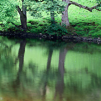 Three Summer Trees Reflected in the River Wharfe near Burnsall