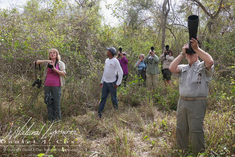 Tourists taking photos of the Great Potoo, near the Rio Pixaim River, Pantanal, Brazil.