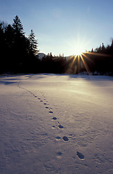 Animal tracks traverse a snow-covered Ammonoosuc River at sunset.  White Mountains. Carroll, NH