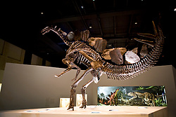 Stock photo of a standing Stegosaurus skeleton at the new Paleontology Hall at the Houston Museum of Natural Science