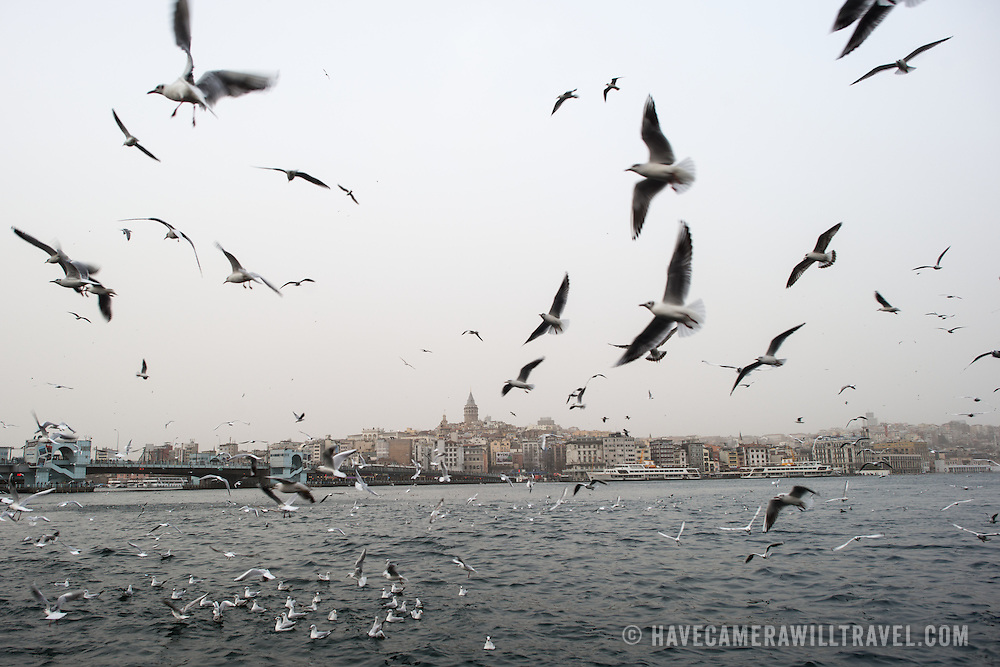 Seagulls swarm to the waterfront of Eminonu in Istanbul.