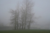Trees in early morning fog in Dublin Ireland