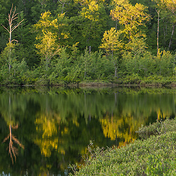 Forest reflections in Round Pond in Barrington, New Hampshire.