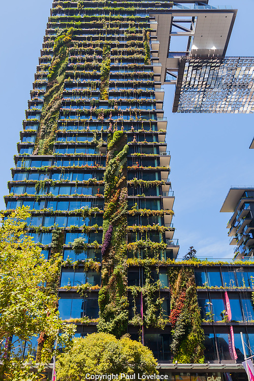General Views showing One Central Park which is built around Chippendale Green. The bulding itself was designed by award-winning Parisian architect Jean Nouvel and the vertical gardens designed by the artist and botanist Patrick Blanc, Chippendale, Sydney, Australia.