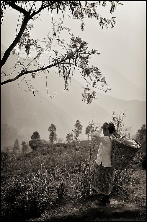 A tea woman gazes out over the landscape before starting her day of plucking tea leaves.